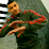 Rihab Bidar's profile photo