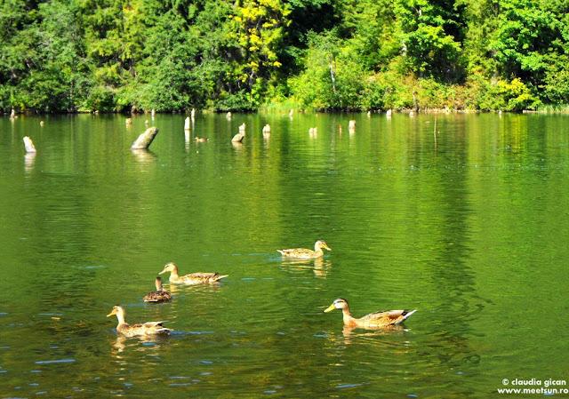 rate pe Lacul Rosu
