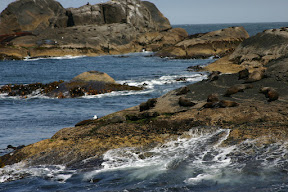 Seals and waves