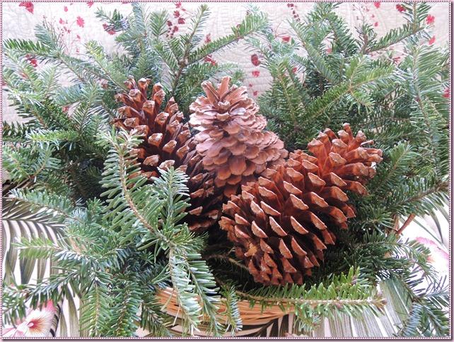 pineconesDSCN4455