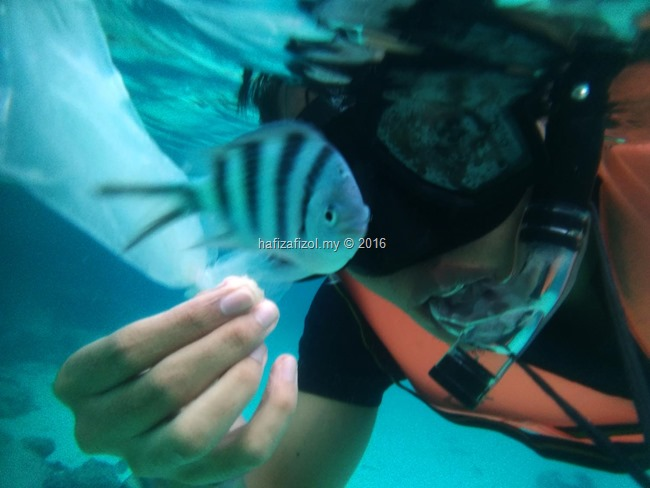 snorkeling pulau redang_5
