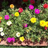 Gardening 2009 - 101_3727.JPG