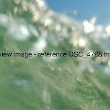 DSC_4768.thumb.jpg