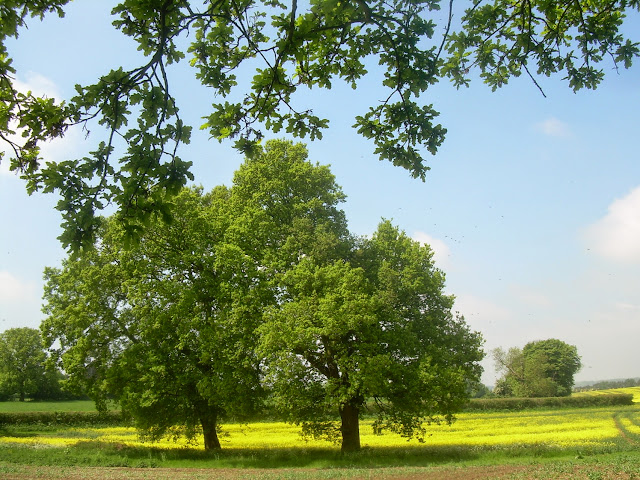 Summer in Hertfordshire