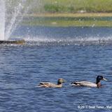 2013 Spring Flora & Fauna - IMGP6424.JPG
