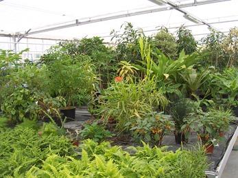 2010.08.13-016 plantes vertes