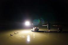 Cormorant Fishing Show