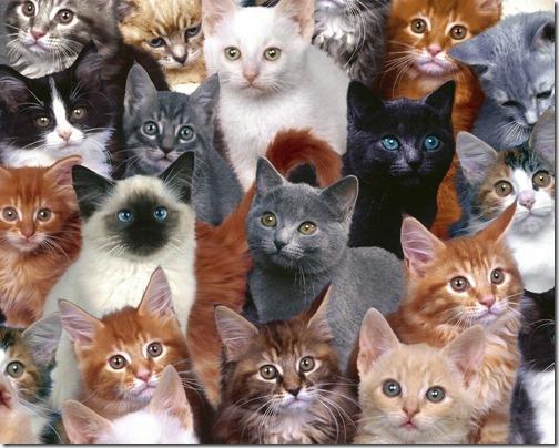 fotos de gatos (7)