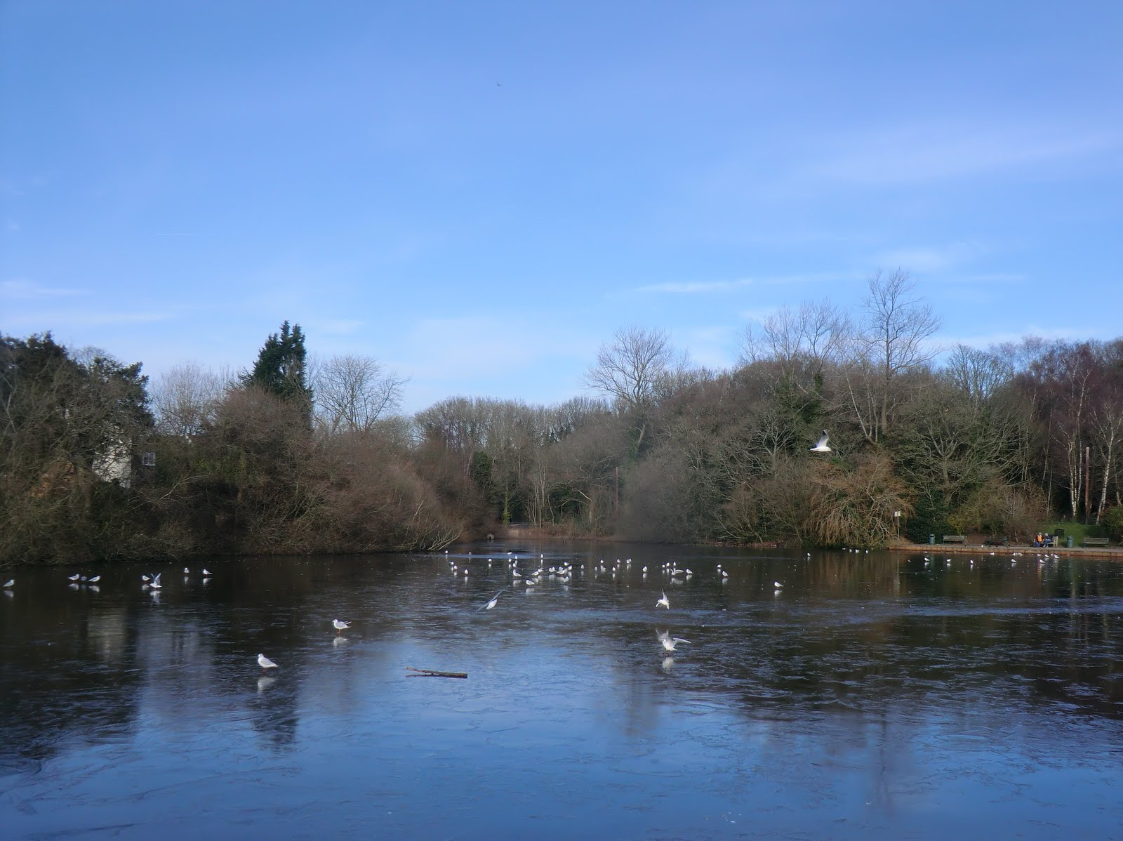 CIMG2222 Mere Pond in winter, Walton-on-the-Hill