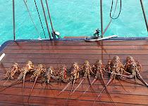 san-blas-sailboat-quest2.jpg