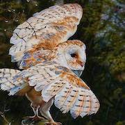 к чему снятся птицы в небе?