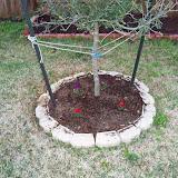 Gardening 2010 - 101_0273.JPG