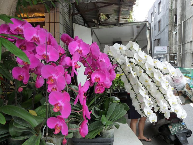 TAIWAN.Taipei - P1110331.JPG