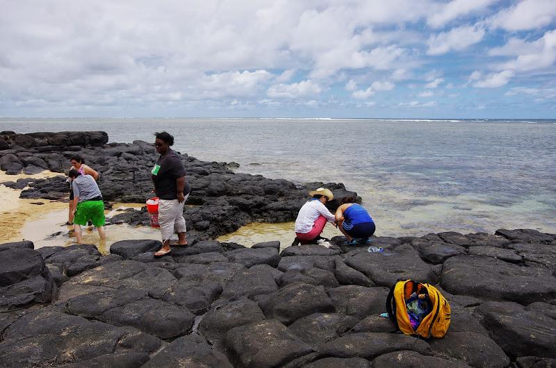 06-25-13 Annini Reef and Kauai North Shore - IMGP9321.JPG