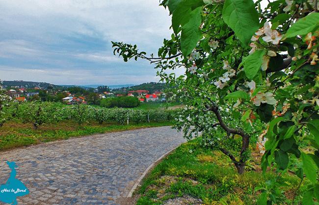peisaj manastire bucium iasi
