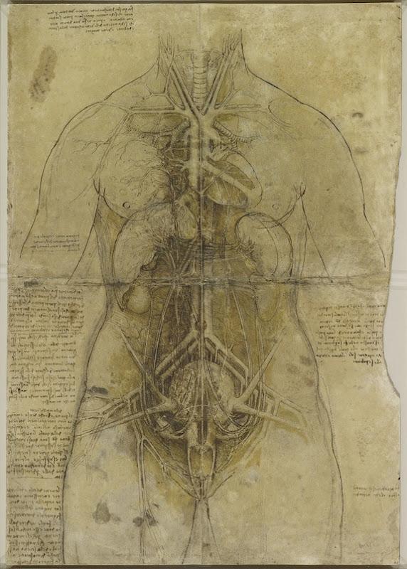 Lukisan Leonardo Da Vinci tentang anatomi manusia