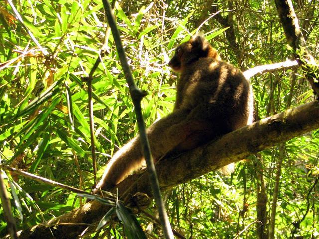 صور من مدغشقر Madagascar 14867771943