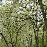 Château de Rambouillet : Jardin anglais, allée verte