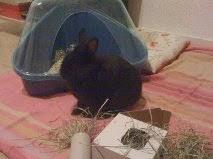 [adopté] Mica, lapin noir Mica4-cdaf5