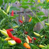 Gardening 2012 - 115_2848.JPG
