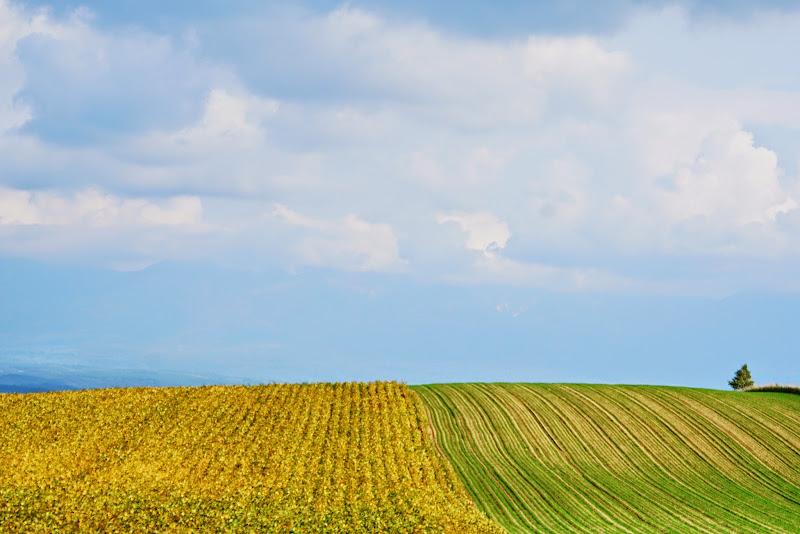 美瑛 ルベシベの丘 写真14