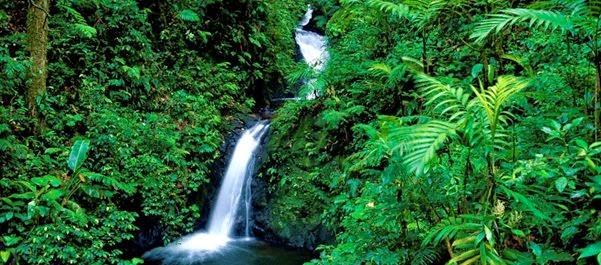 Reserva Biológica Bosque Nubloso Monteverde