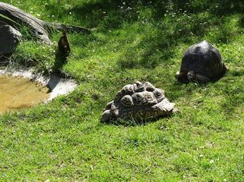 2017.06.17-042 tortues