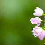 Flower 013_1280px.jpg