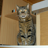 2014-3 gatti