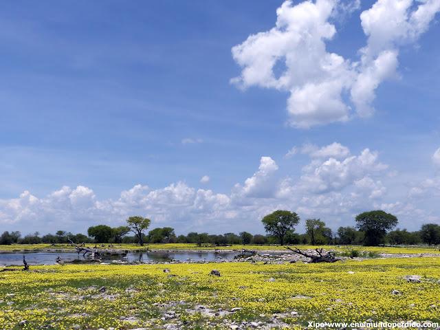 savana-namibia.JPG