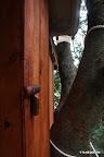 背後の壁は、2つに枝分かれする3本目の枝をよけるように配置された。(手前は空いた空間に作られた掃除用具入れと、リョウブを削って作られたドアノブ)
