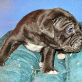Available black girl@ 3 weeks