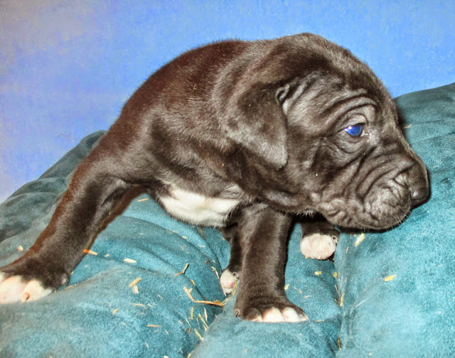 Available black girl @ 3 weeks