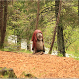 Trollskogen, Fløyen