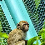 Kuala Lumpur - auf dem Weg zum Birdpark