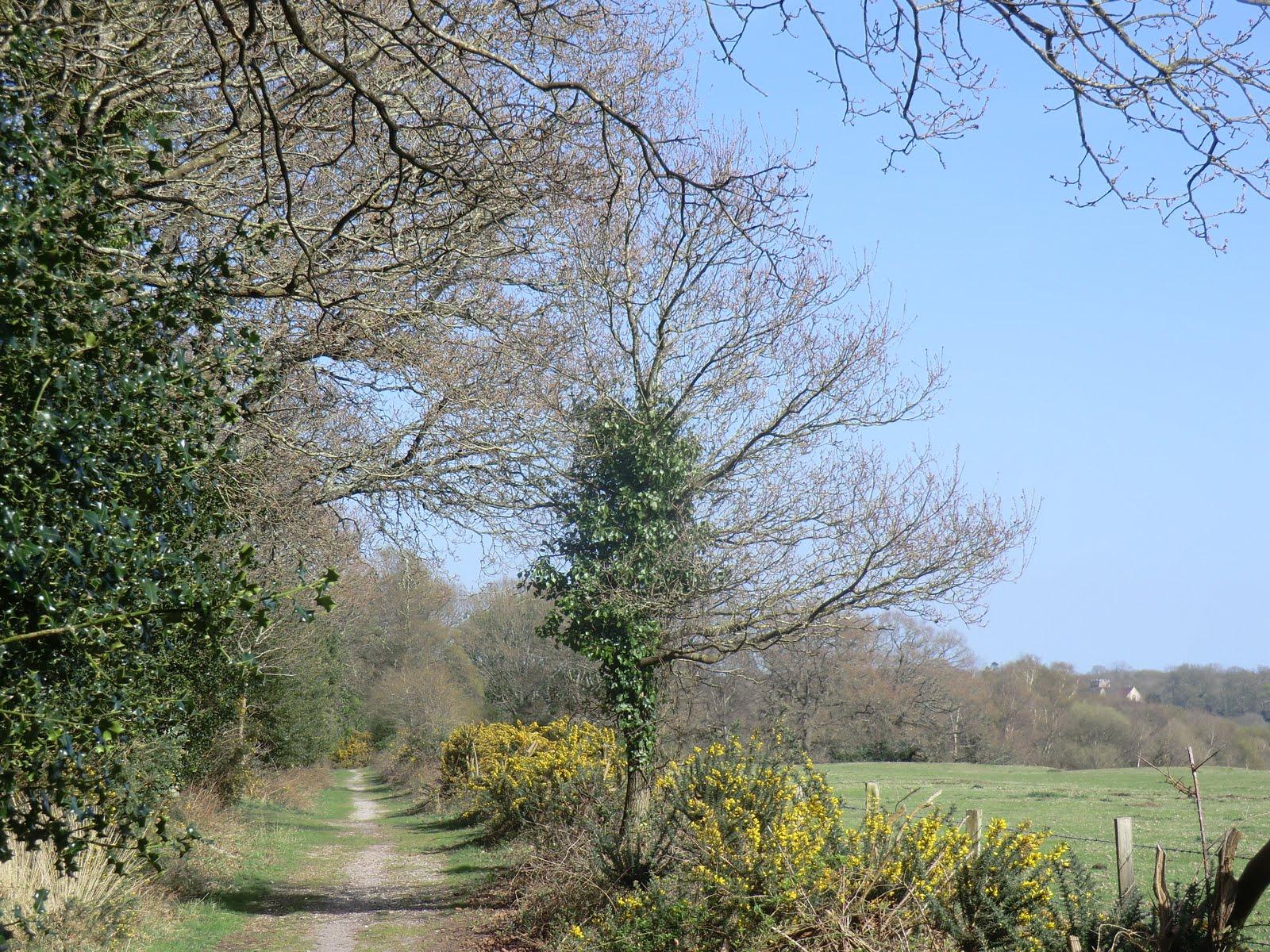 CIMG7787 Woodland path, Roydon Woods