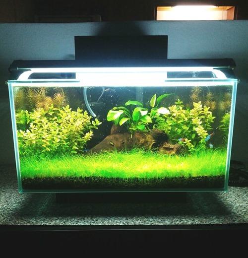 choosing-my-first-fish-tank-(2)