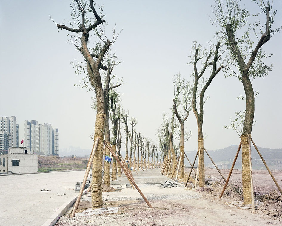 transplanting-trees-china-preston-6