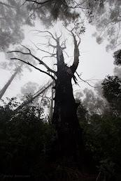 Misty day at Polipoli