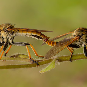 Day in enjoy by Faiq Alfaizi - Animals Insects & Spiders