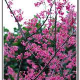 櫻花與福袋 - DSC_0123.jpg