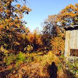 Anderson Creek Hunting Habitat - DeerHabitat001.JPG