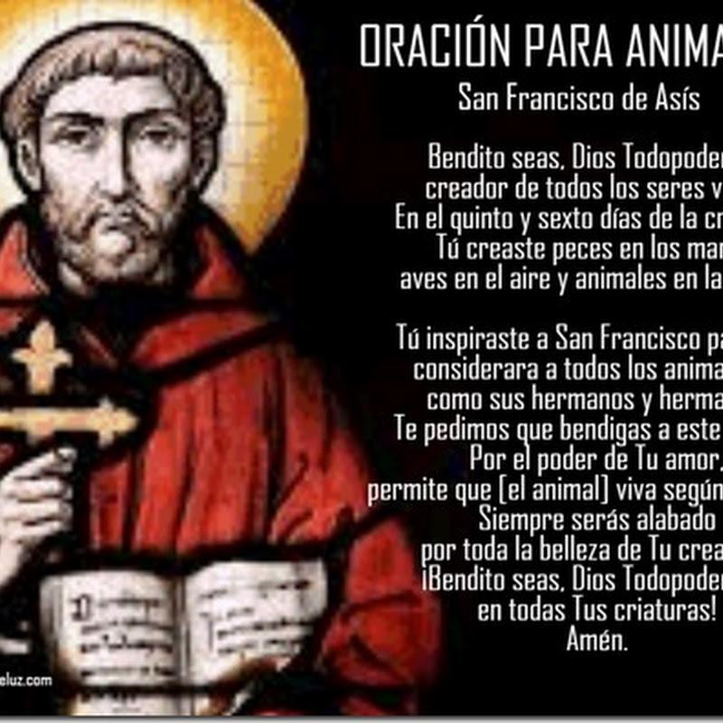 Oración para sanar mascotas a san francisco de asis