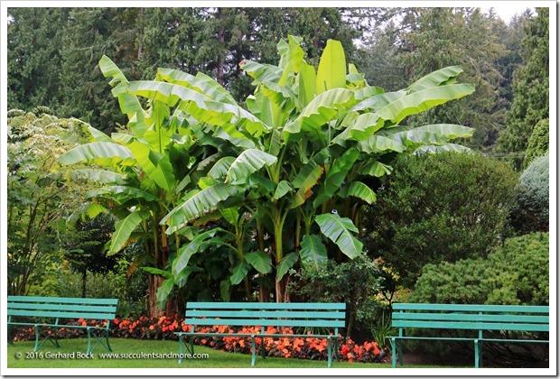 160906_Butchart_Gardens_0012