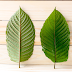 The Kratom Benefits List: 5 Generous Benefits Backed by Science