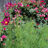 Gardening 2010, Part Three - 101_4443.JPG