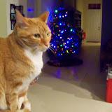 Christmastime - 116_6387.JPG