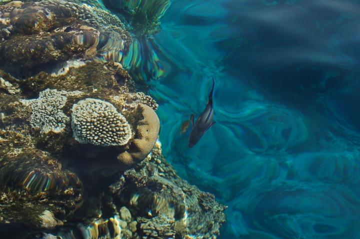 Caleidoscopio marino di cuba59