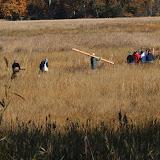 Guilford Salt Meadow Sanctuary Osprey Platform - 10-25-09%2B018.jpg