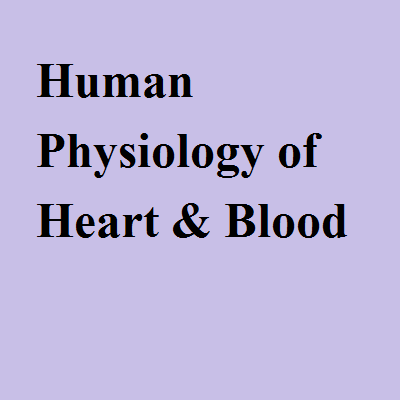Human Physiology of Heart & Blood
